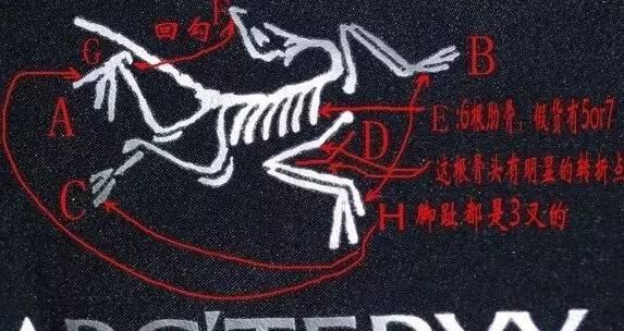正品始祖鸟logo刺绣